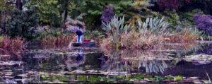 Botanical Gardens New York - Water Lilies (pink)