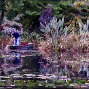 Monet's Garden coming to life in New York Botanical Gardens